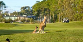 Kangaroos and Cart Paths